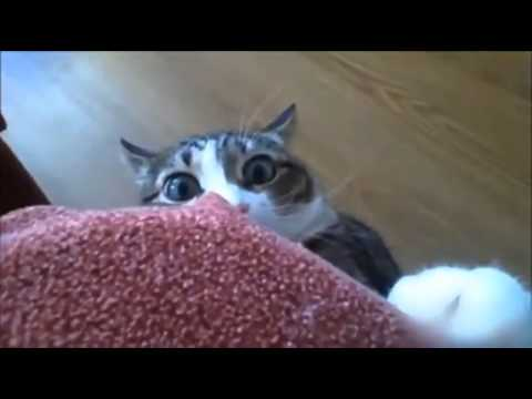 catwatcher