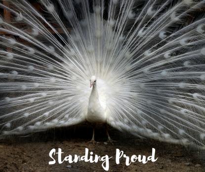 Standing Proud (1)